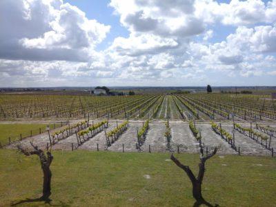 O êxito dos vinhos de Setúbal