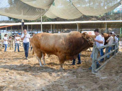 Durante três dias em São Teotónio:  FACECO promete atrair milhares de visitantes